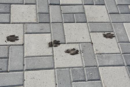 Sporen van een hond op een pad van grijze plaveisels Stockfoto