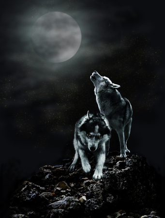 A pair of wolves on a dark night and the moon