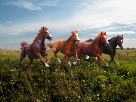 Wild horses gallop along the grass