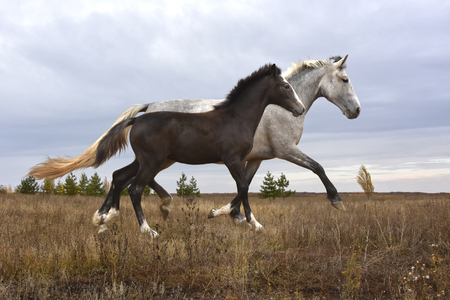 a horse with a foal