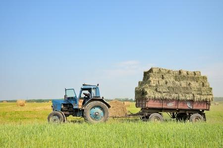 fardos: Tractor con heno. El tractor lleva heno. Pacas de heno apiladas en el carro. Foto de archivo