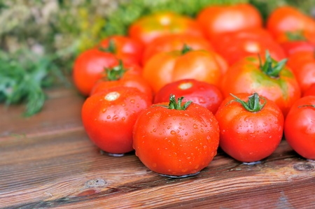 Fresh tomatoes. Tomatoes on a wet wooden table. Tomatoes are a close-up on a background of greenery.