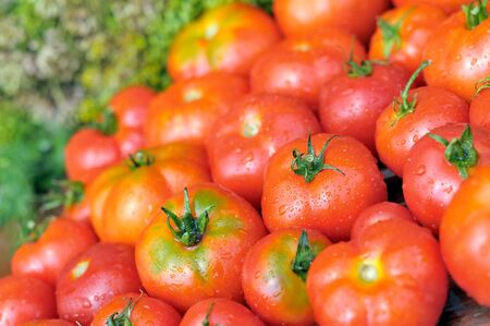 Fresh tomatoes. Wet ripe tomatoes. A group of red-ripe vegetables. photo