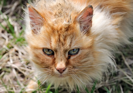 decrepit: Old lonely cat.