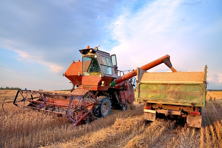 harvester: Combine Harvester. Combine harvesting. Loading wheat into the machine. Harvest. Farming in the field. Stock Photo