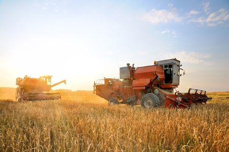 secale: Combine Harvester. Combine harvesting. Agricultural machinery. Harvest. Farming in the field.