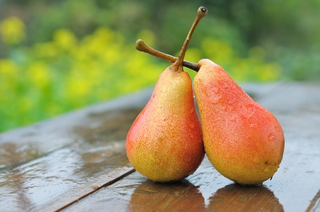 Two ripe pears ene wooden table. Fruit on a green background. Stock Photo - 11365359