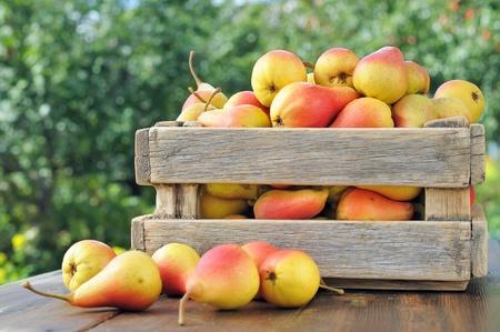 Las peras en una caja de madera sobre la mesa. Peras en el fondo del follaje verde.