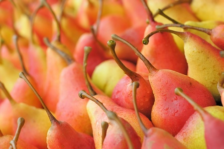 Background of ripe pears. A lot of ripe pears. Red and yellow fruits.