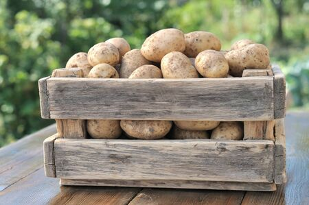 Potatoes in a wooden box with a green background.