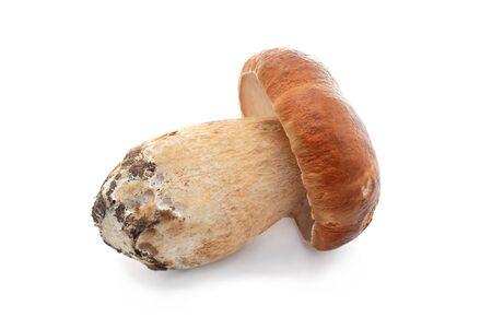boletus mushroom: Cep. Mushroom on a white background.