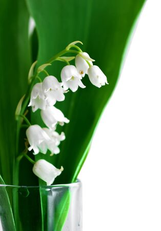 Spring wild flowers - lilies of the valley.