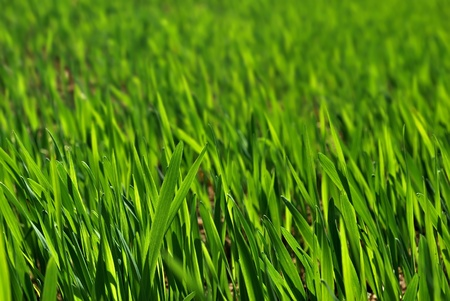 Green grass. Summer meadow background Stock Photo - 11639872