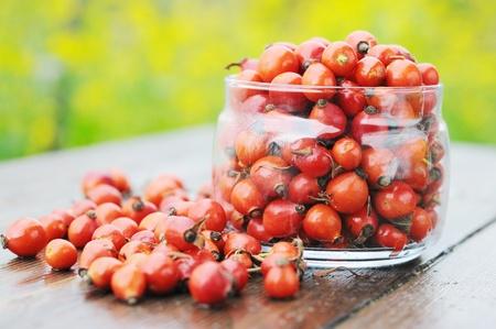 briar: Harvest rose hips in a glass jar. briar