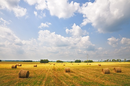 rick: The field of mown grass. Harvesting. Haystacks at sunset.