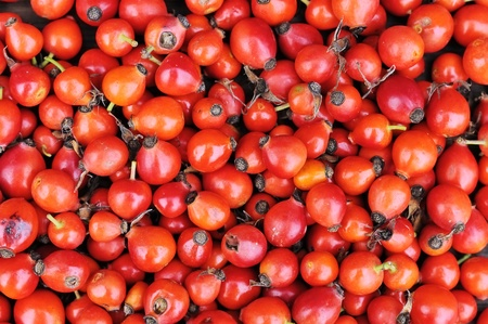 Background of ripe rose hips
