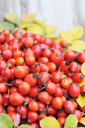 dogroses: Scattered rose hips on the table.