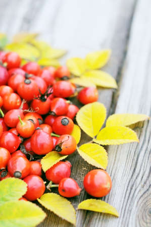 rose hips on a wooden table photo