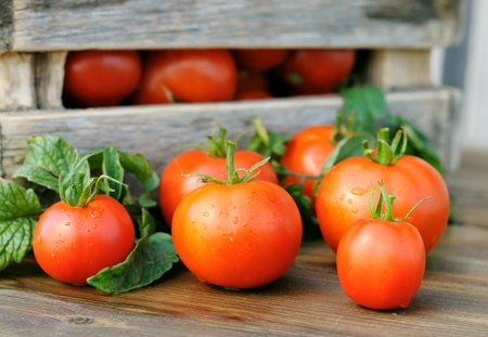 Ripe tomatoes  and a wooden box  Stock Photo - 12566868