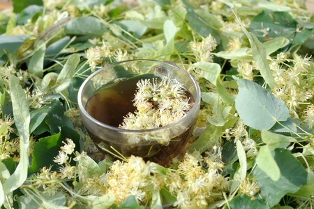 limetree: lime-tree flower and a cup of tea with lime  Linden tea