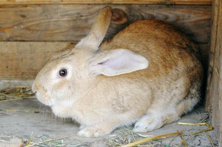 rabbit cage: Casa rossa in una gabbia di conigli in legno