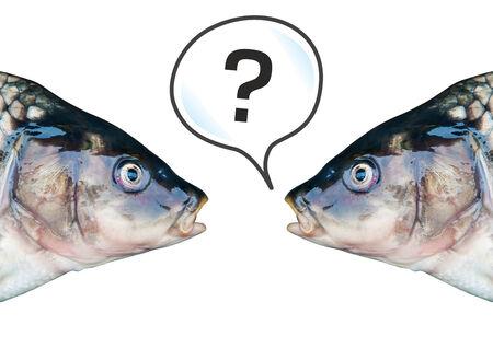 mirror carp: Fresh fish on a cutting board. Carp mirror.