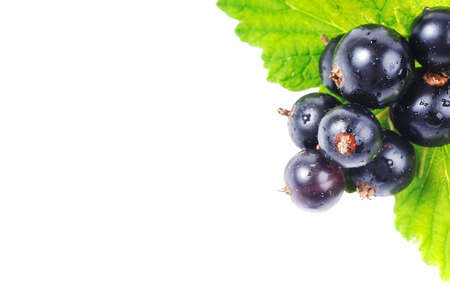 black currant: Black currant with green leaves in the corner of the frame. black currant on a white background. Stock Photo