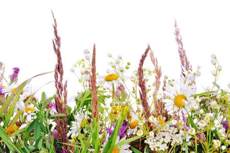 meadow  grass: