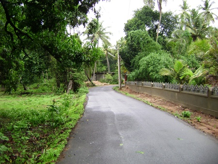 Village Road leading through trees and gardens photo
