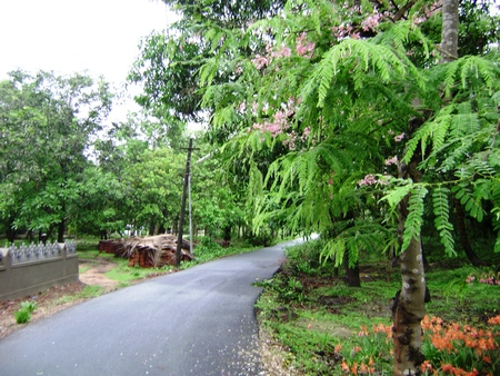 Village Road leading through beautiful trees and gardens photo