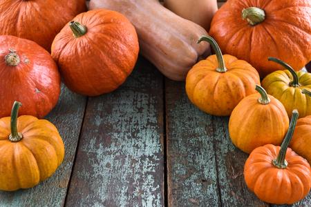 Helloween, Harvest Festival, Thanksgiving. Bright orange pumpkins on robin egg blue background copyspace