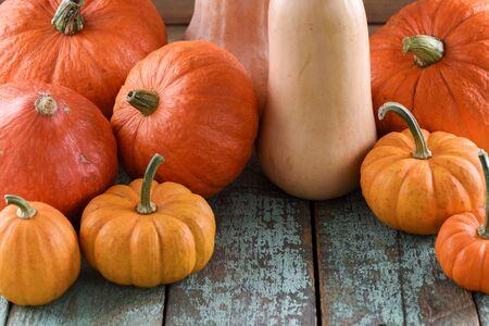 Helloween, Harvest Festival, Thanksgiving. Bright orange pumpkins and butternut squashes on robin egg blue background closeup