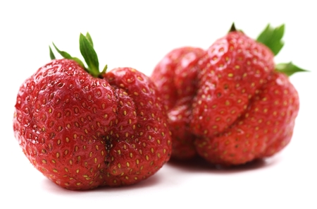 Ugly organic heirloom home grown strawberries isolated closeup