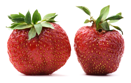 Non-ideal organic heirloom strawberries isolated closeup
