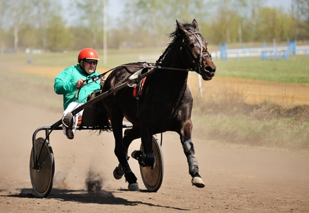 Orel, Russia - April 30, 2017: Harness racing. Brown horse running fast with a sulky in sunny day