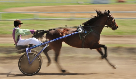 Orel, Russia - April 30, 2017: Harness racing. Sorrel racing horse pulling a sulky motion blur