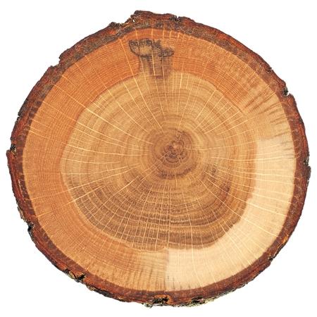 Spaccatura della quercia incrinata con vista dall'alto isolata corteccia