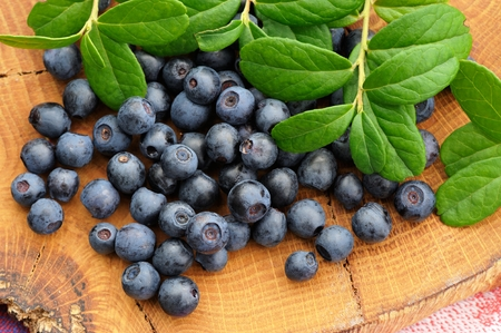 Juicy fresh wild blueberries with green leaves scattered on handmade wooden board closeup