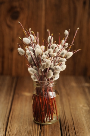 Bouquet of pussy willow twigs in glass jar on wooden background selective focus vertical Stock Photo