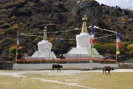 Tibetian buddhist stupas and cows Stock fotó - 104374048