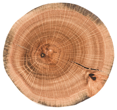 Piece of circular wood slab with cracks and tree growth rings. Oak tree slice texture isolated on white background overhead view