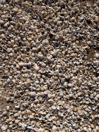 Broken sea shells on beach texture background pattern Banco de Imagens