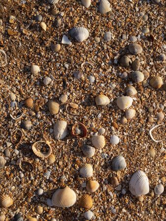 Sea shells in sandy beach in morning light texture background overhead view