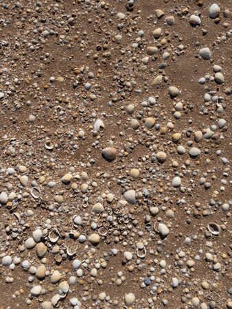 Broken shells on wet sand texture as background overhead view