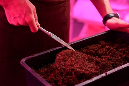 Indoor gardening concept. Man hands preparing soil in plastic container for microgreens growing copy space