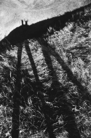 Long shadows of two people on grass. Black and white fine art film photography