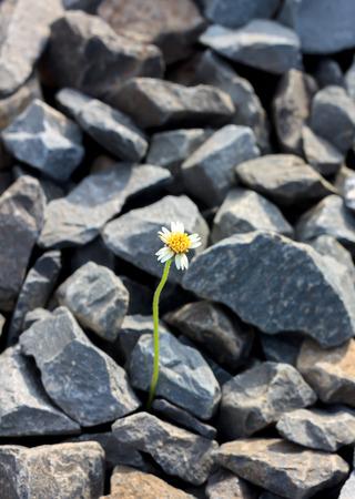 insular: Soft focus flower on rock blur background.