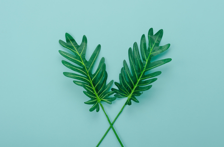 Table top view aerial image of summer season holiday background concept.Flat lay green leaf on modern rustic blue paper backdrop.Free space for creative design mock up & template text for content.