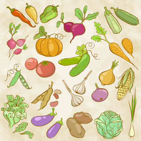 Drawing Colored Contours of Vegetables Vector
