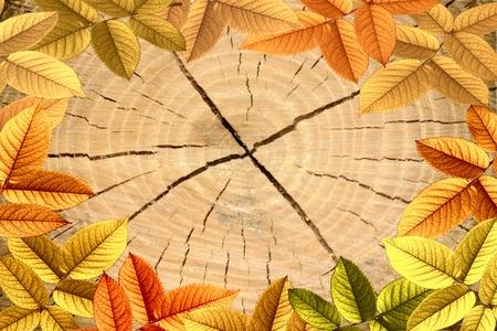 Beautiful texture of tree stump a Oak Tree with autumn leafs photo
